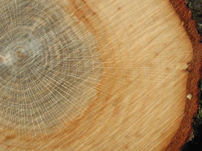 Дубовая древесина